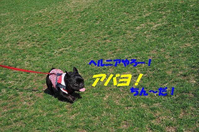 DSC_0479_2016111410264455e.jpg
