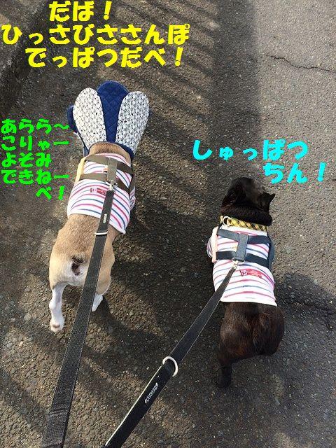 IMG_0459_2017013016500606a.jpg