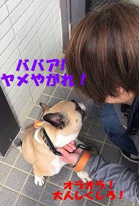 IMG_0654_20170207133027fda.jpg