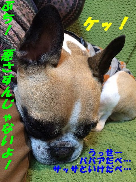 IMG_9255_20161206085338377.jpg