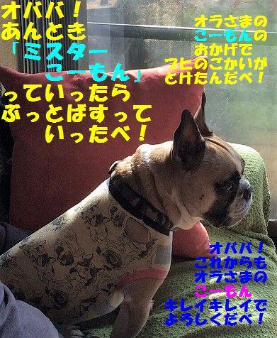IMG_9319.jpg