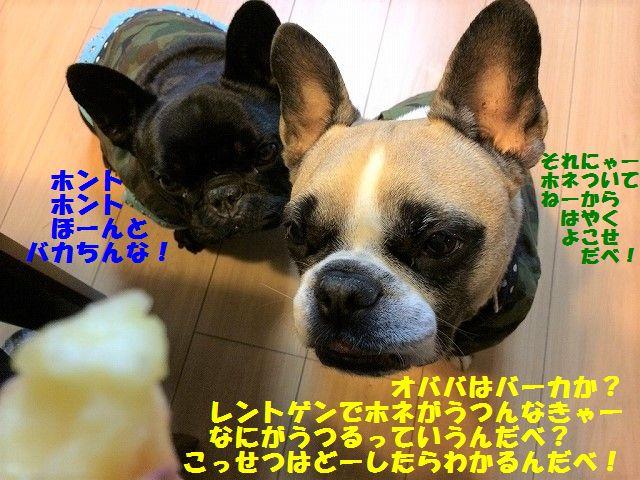 IMG_9767.jpg