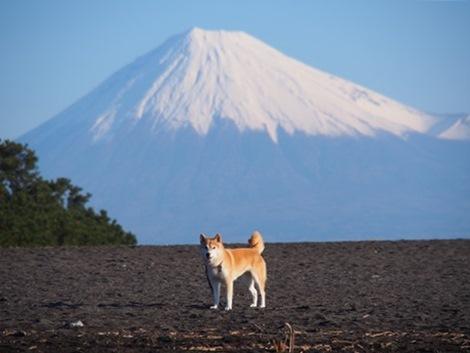 富士山ど~ん