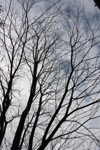 katsura1701.jpg