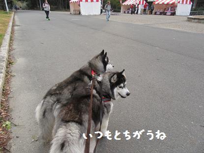 IMG_0525y.jpg