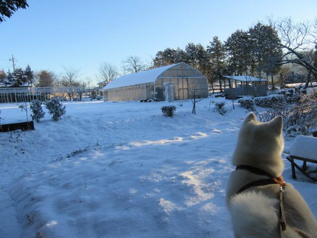 裏の畑も真っ白です。