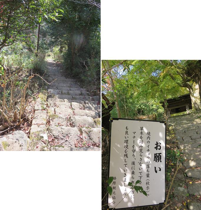 IMG_5328bb.jpg