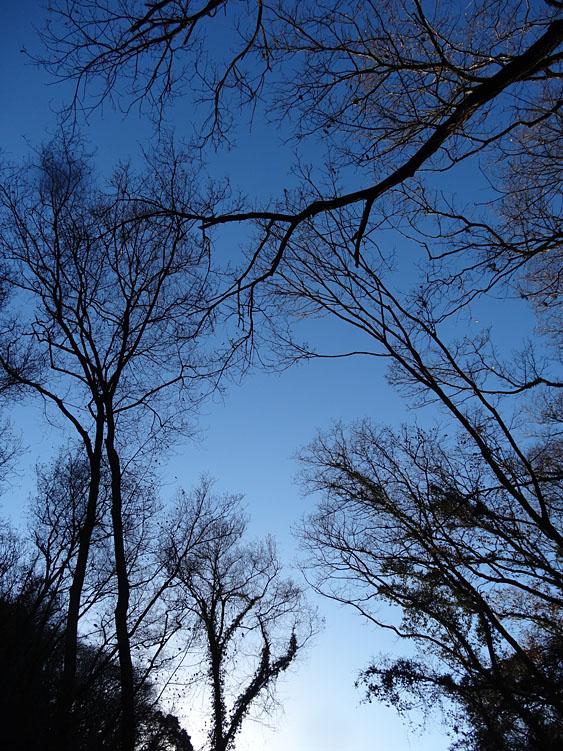 161223小網代の森'冬'01