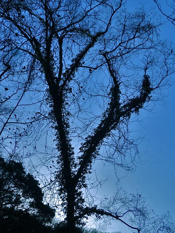 161223小網代の森'冬'02