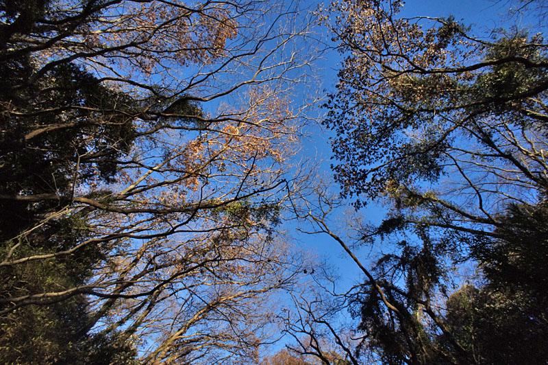 161223小網代の森'冬'03