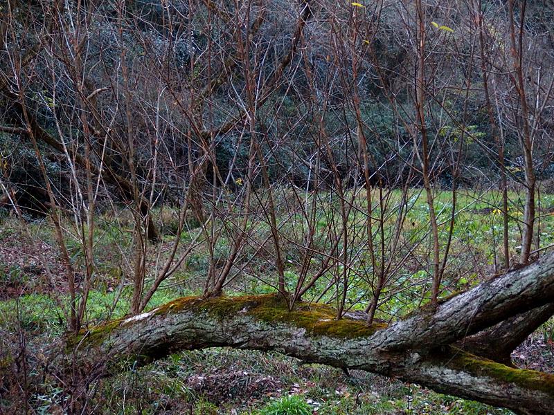 161223小網代の森'冬'05