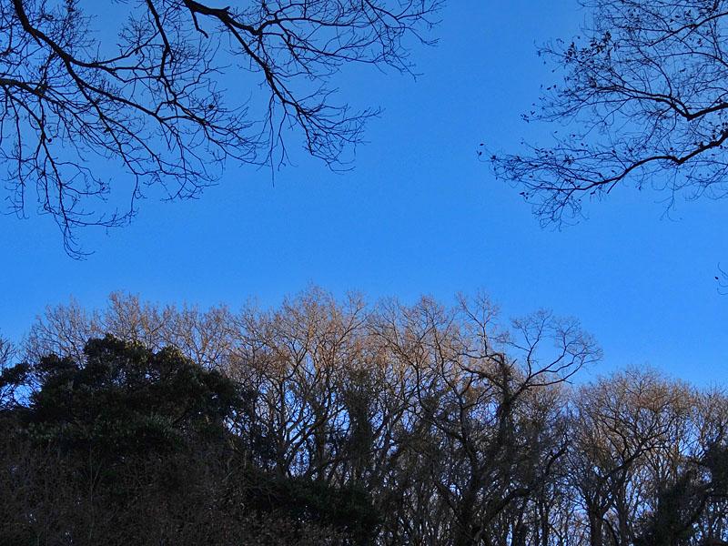 161223小網代の森'冬'09