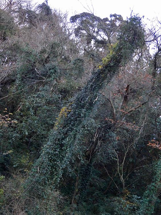 161223小網代の森'冬'11