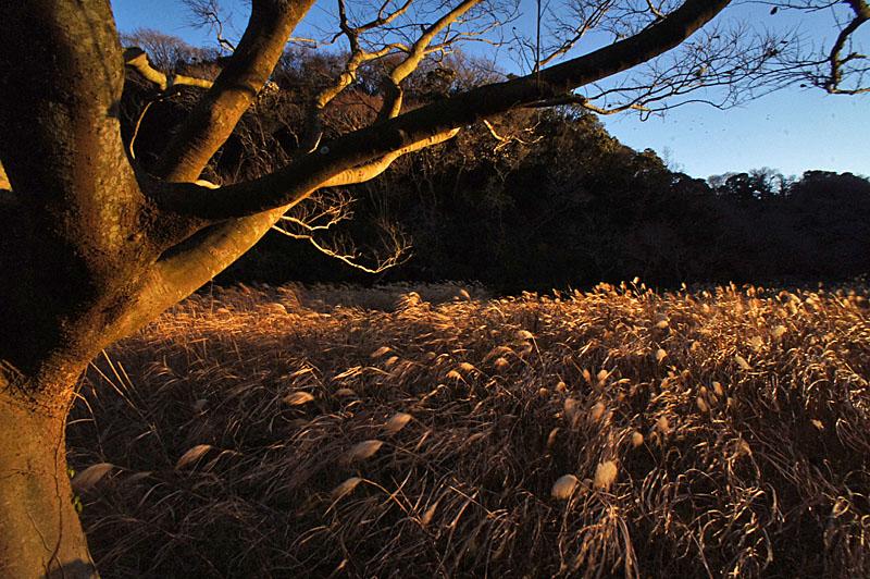 161223小網代の森'冬'13