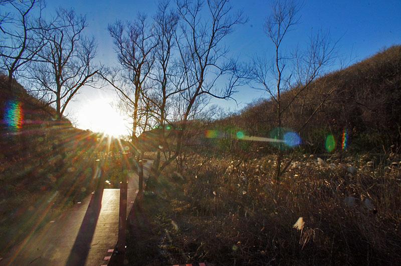 161223小網代の森'冬'14