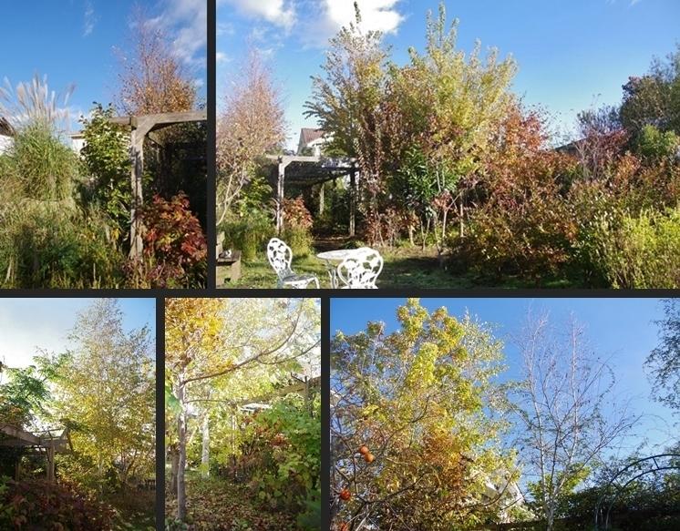 IMGP3572-horz-vert.jpg