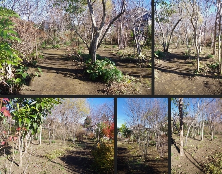 IMGP5987-horz-vert.jpg