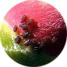 camellia_sasanqua010.jpg