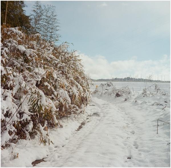 2-1-ローライⅢ-2017-1-15-portar400-雪景色-1-16020005_R
