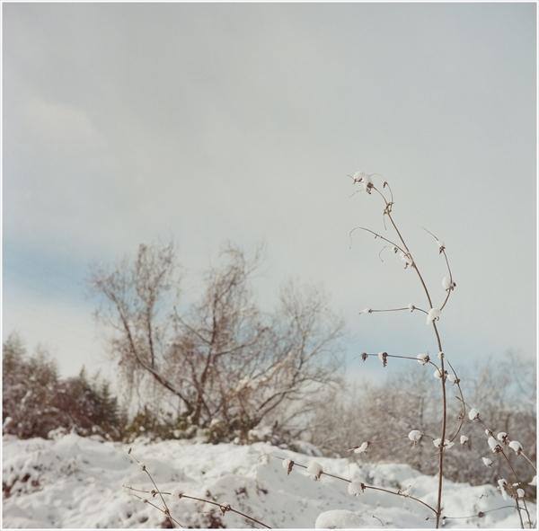 3-1-ローライⅢ-2017-1-15-portar400-雪景色-1-16020006_R