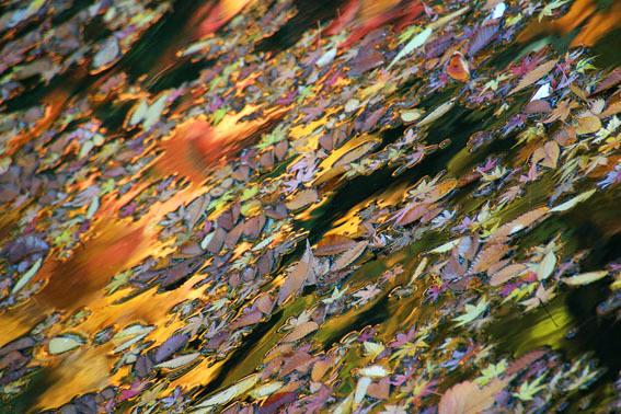 平林寺の紅葉4