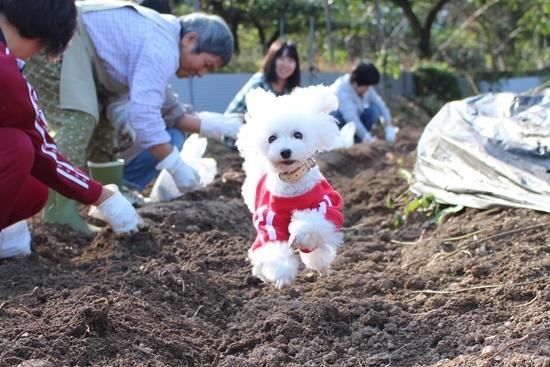 畑で飛行犬