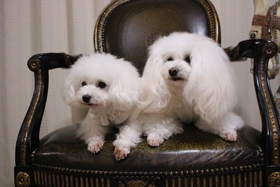 ホワイト姉妹2