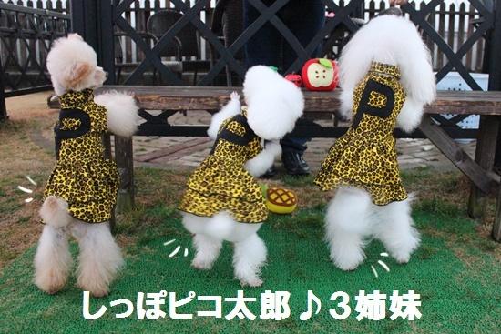 しっぽピコ太郎3姉妹B