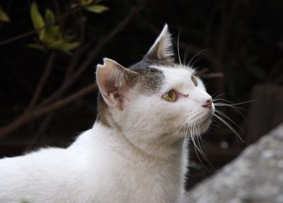 千代田区の猫