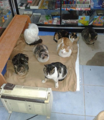 refuge-homeless-cats-shop-snowstorm-istambul-8.jpg