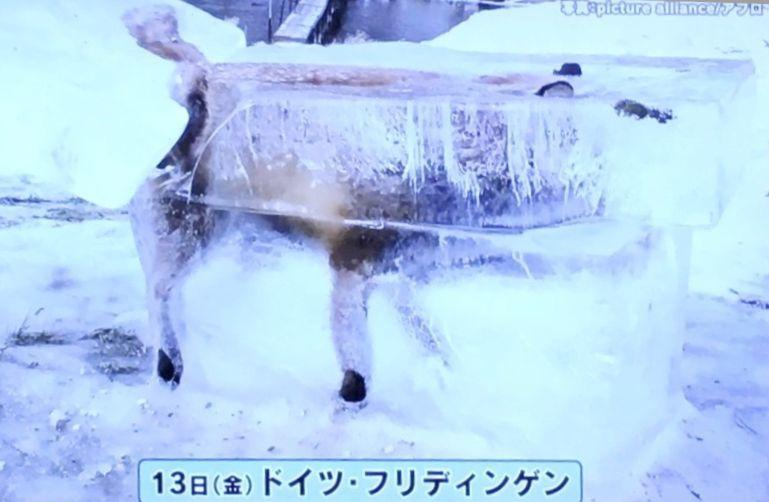 サンデーモーニング 氷詰め 死骸