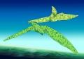 pteranodon170118.jpg