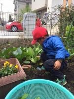 野菜収穫2 12・20