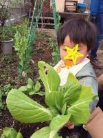 野菜収穫1 12・20