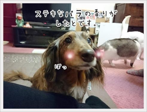 fc2_2017-01-18_05.jpg