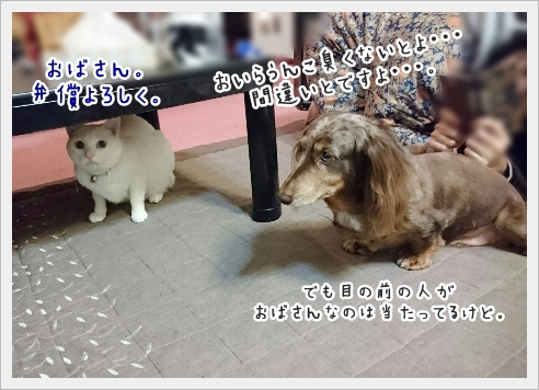 fc2_2017-01-18_10.jpg