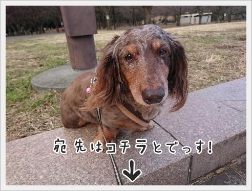fc2_2017-02-01_05.jpg