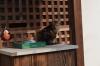西林寺太子堂猫