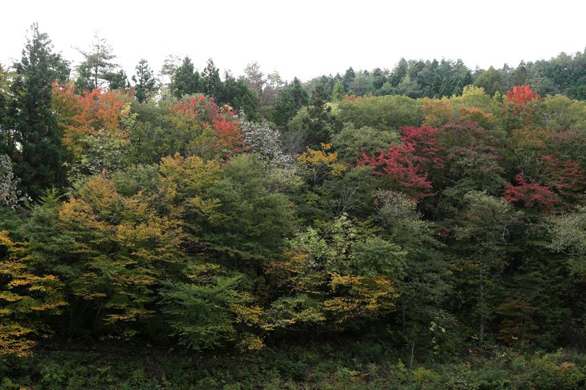 20161030藤沢の紅葉