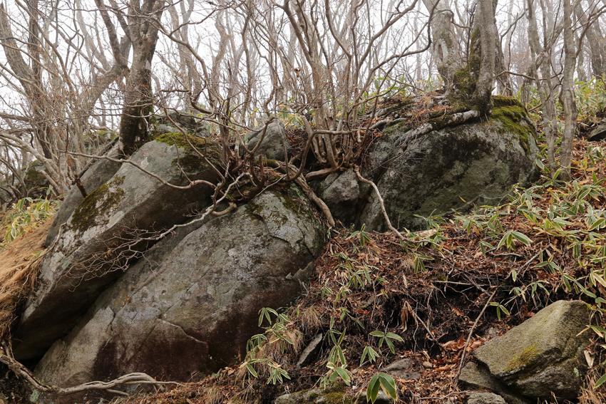 20161120五葉山の巨石1