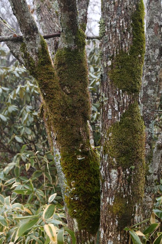 20161120五葉山の広葉樹