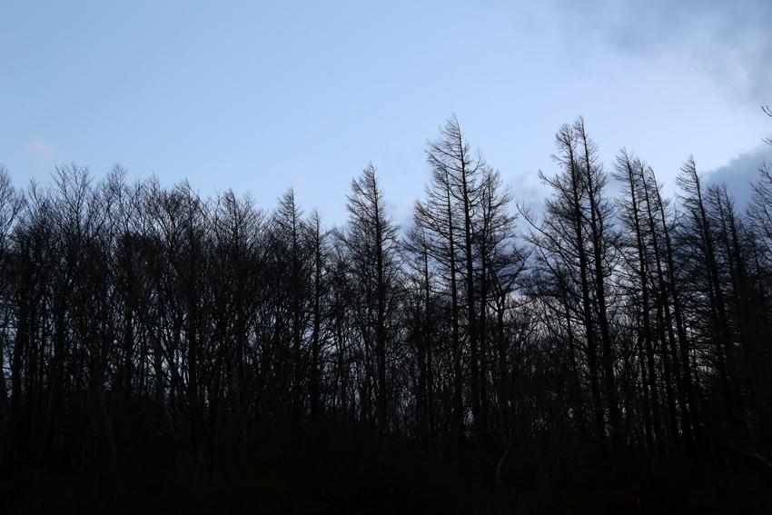 20161120コメツガ林