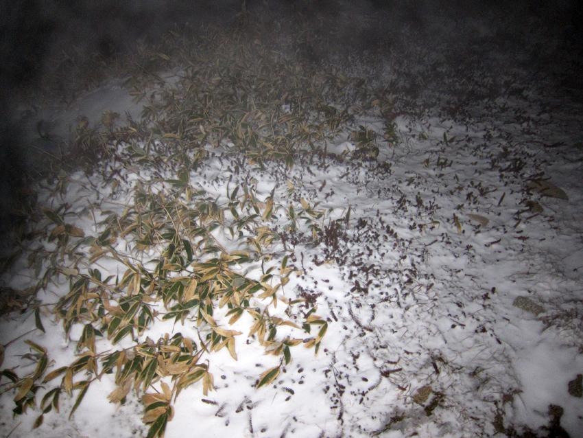 20161204雪が残る五葉山1