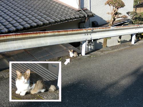 ネコ発見っ! 2 匹目っ!