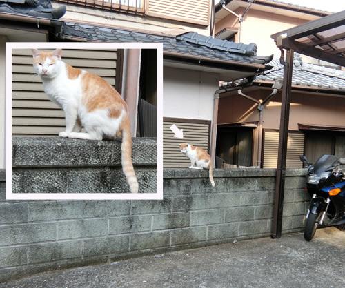 ネコ発見っ!! シッポだら~ん!