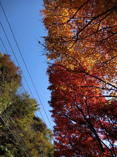 ついでに紅葉。 その1。