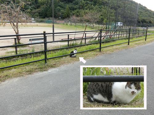 1匹目、ネコ発見っ!