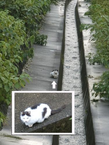 ネコ発見。 どーやって降りたんだろ。
