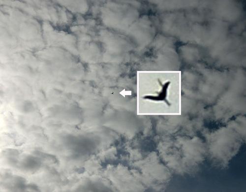 ドグマ2、飛んでるトコ!その1。