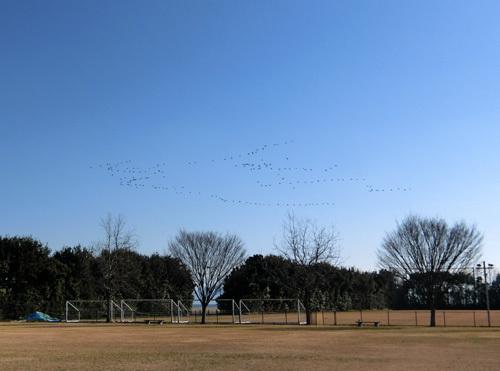 渡り鳥~!